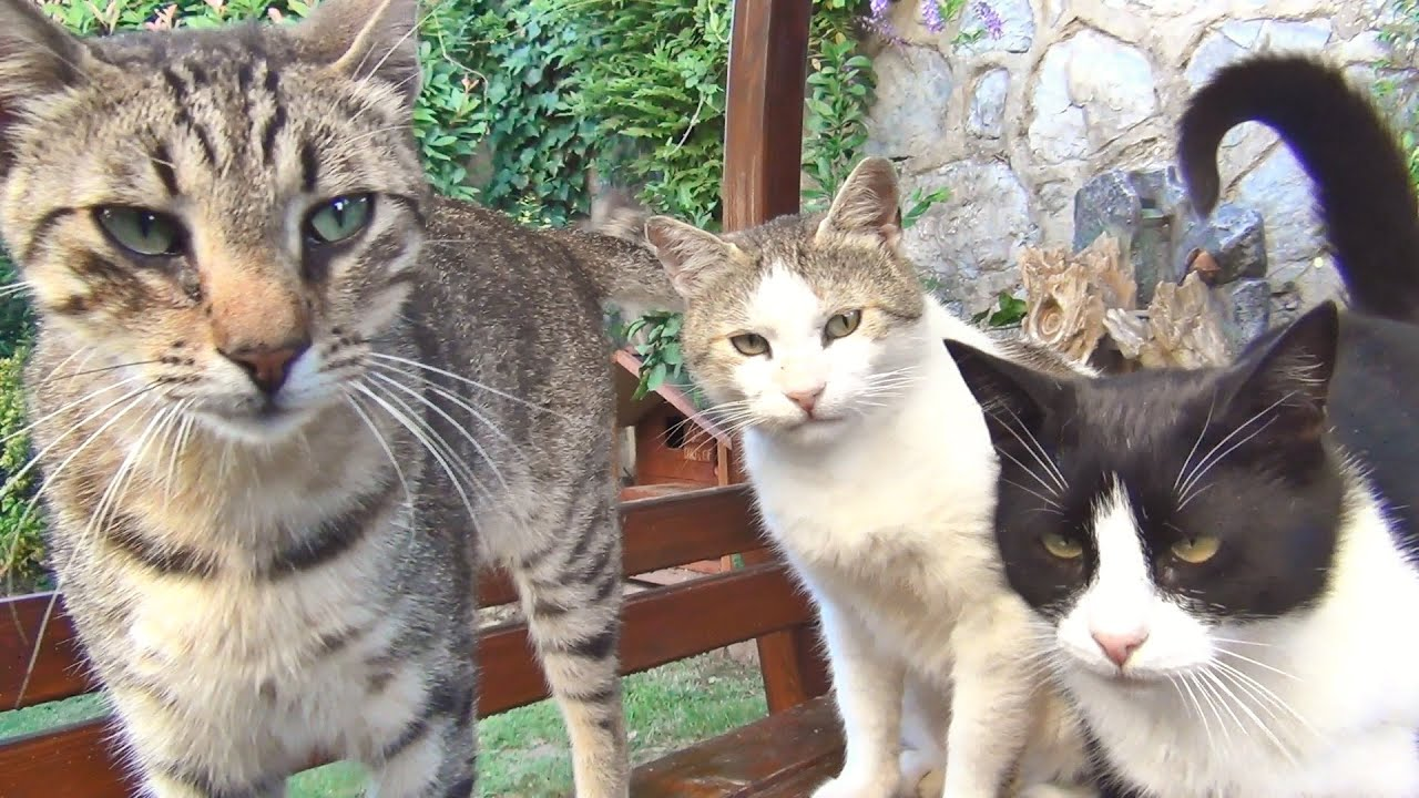 """Our Cats Always Run And Hide When """"THE THING"""" Arrives!!"""