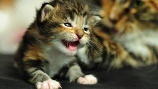 Лучшие милые котята мяуканье кошки - мяукать - сборник Громко Мяу