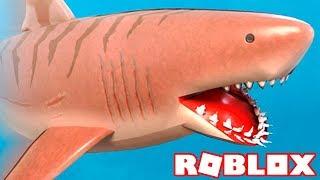 Ich verwandelte mich in ein MEGALODON und DEVOUT EVERYONE in ROBLOX 🦈 ' SharkBite 🎮
