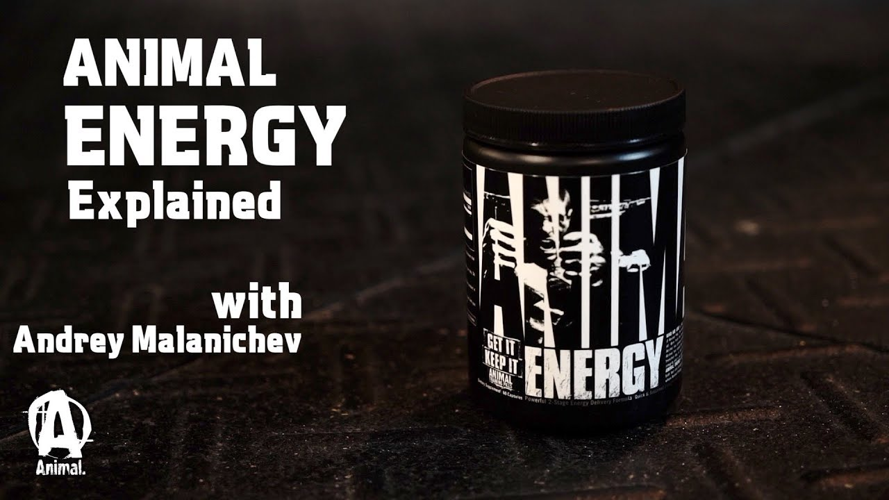 Animal Energy Explained with Andrey Malanichev