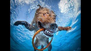 О переводе собак с сухих кормов и консервов на натуральное видоспецифическое питание!  28 июля 2018