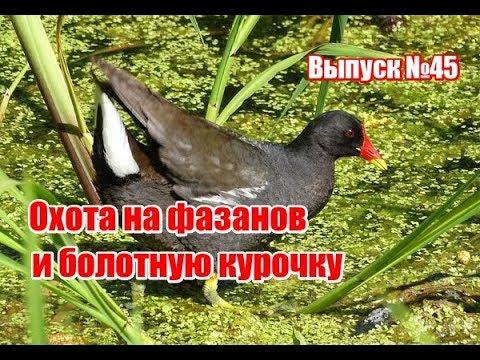 download Записки о продовольствии войск в военное