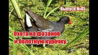 Охота на болотную курочку и фазанов, выпуск №45 (UKR)