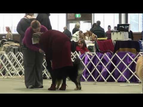 FLCV Inaugural Finnish Lapphund Champ Show - State Bred Dog