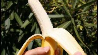Gwen Stefani - Bananas (Official Music Video)