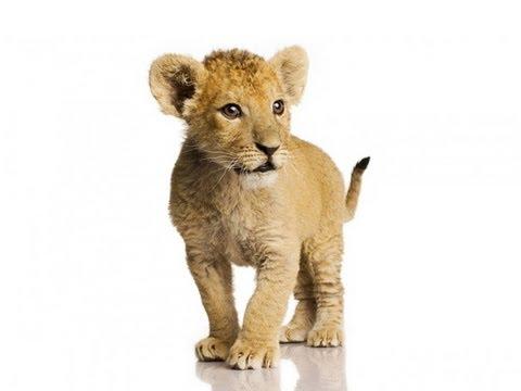 KILLER BABY ANIMALS -- FAK #25