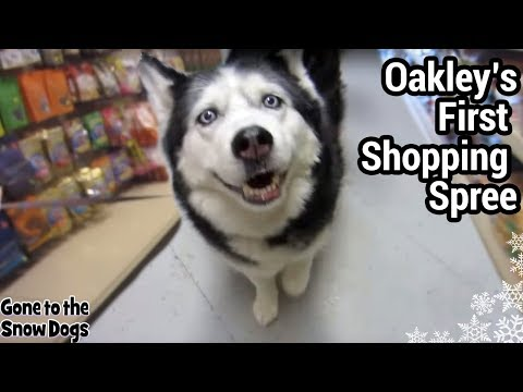 Oakley's First Pet Shop Visit - Wags to Whiskers