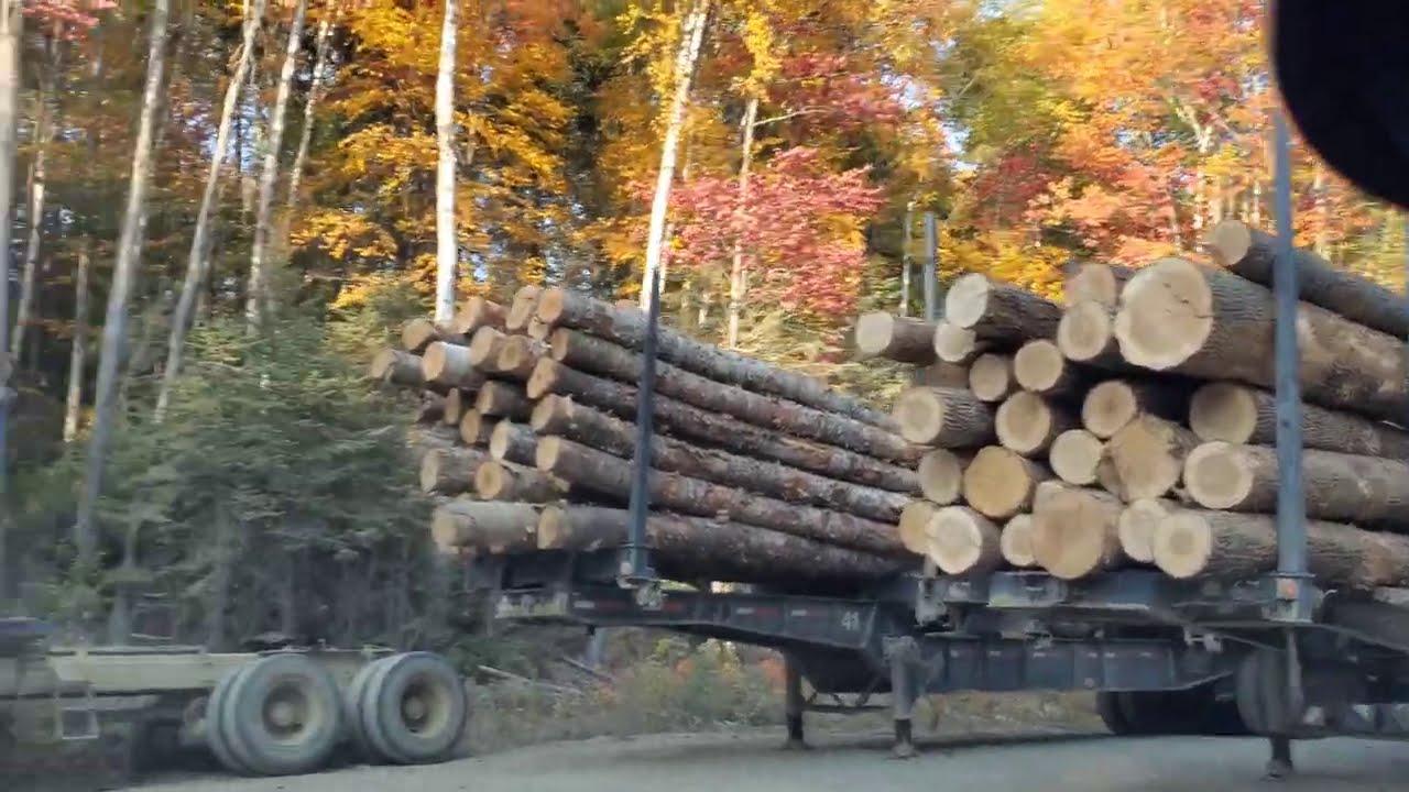 Logging Ferry, Island Logging