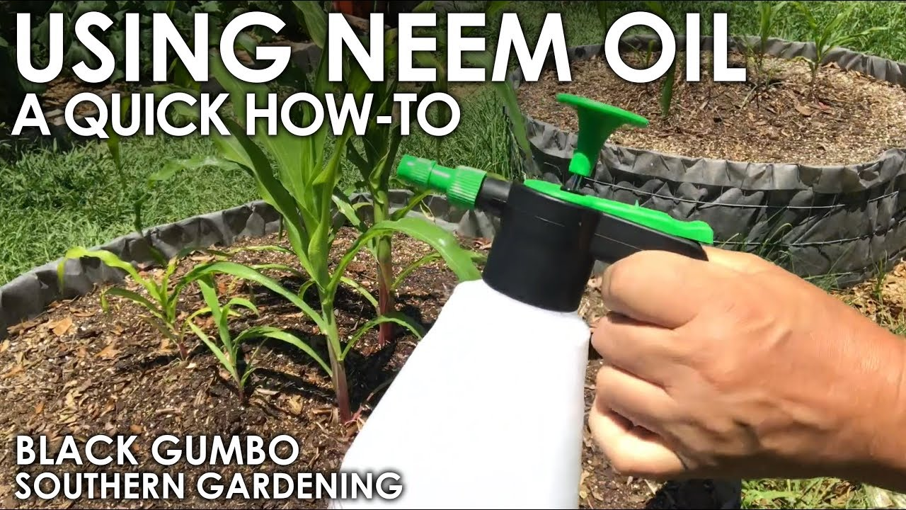 How To Use Neem Oil in the Garden