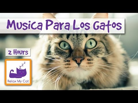 Music for cats. Relaxing music for cats.