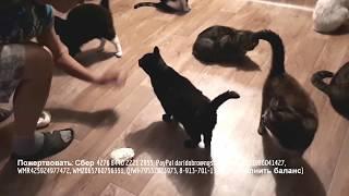 Ремонт в приюте для животных Дари добро shelter for animals in Russia