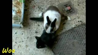 rabbit mating cats