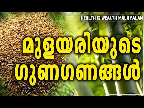 bamboo rice benefits bamboo rice benefits healthy food recipes malayalam health tips malayalam forumfinder Image collections