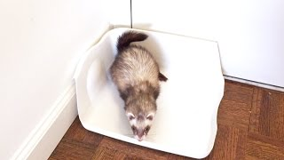 DIY Litter Box That Your Ferret Will Love Using