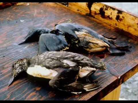 U P D A T E   Who is really at fault for the Gulf Oil Spill  U P D A T E