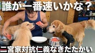スイカ早食い競争!大型犬3頭vs変態飼い主