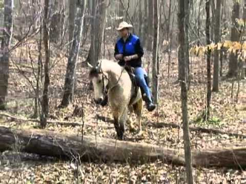 Ohio Horse Auction from YouTube · High Definition · Duration:  1 minutes 44 seconds  · 260 views · uploaded on 30.08.2013 · uploaded by Myers Jackson