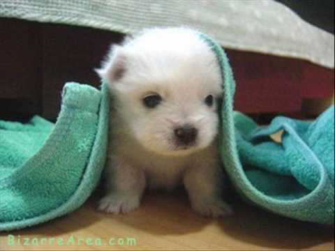 cute little animals - YouTube