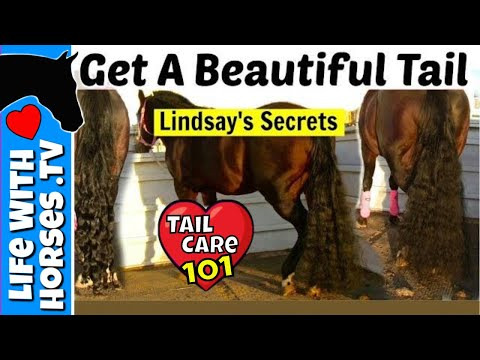 How To Make Your Horses Tail Grow Fast! Horse Tail Care- Life With Horses TV