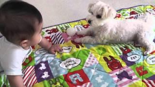 赤ちゃんにお気に入りのボールを貸してあげる犬 thumbnail