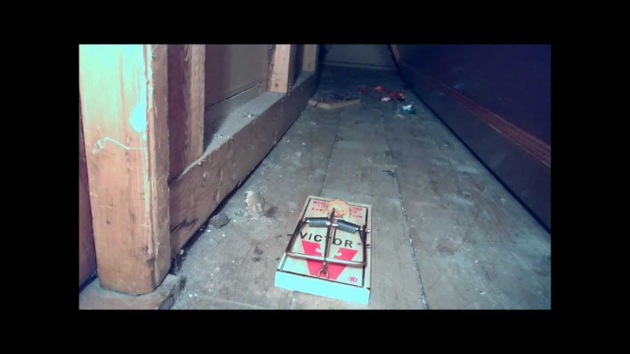 CAUTION NOT FOR SENSITIVE VIEWERS> PEST CONTROL----Squirrel vs Rat Trap!