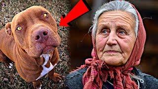 Бабушка приютила у себя взрослого питбуля, которого хозяева бросили в лесу. А спустя время пёс...