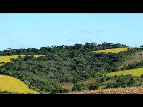 Restauração Florestal - Reserva Legal