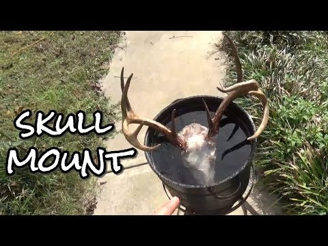 DIY European Skull Mount with a Pressure Washer