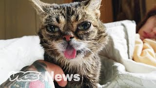 Rip Lil Bub: This Is What Happens When Famous Pets Die