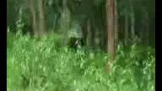 Elephant Chase.3gp