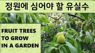 정원수로 좋은 나무, THE BEST FRUIT TRE…