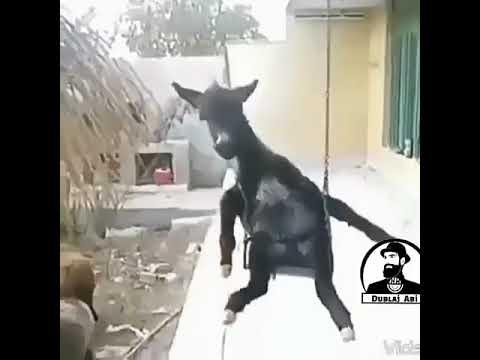 Hayvanlar alemi dublaj 2 komedi