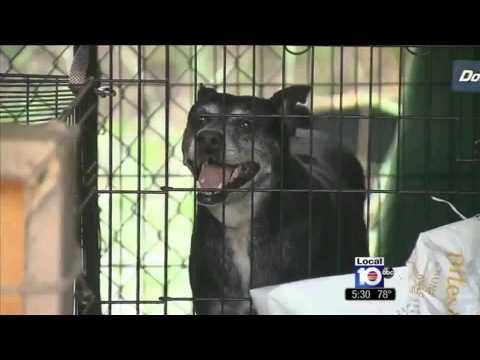 ABC News.....Dogs Found