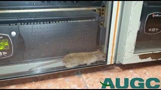 """La AUGC denuncia la presencia de """"ratas y otros roedores"""" en acuartelamientos de Las Palmas"""