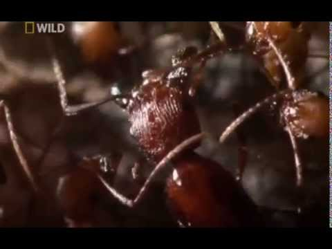National Geographic City Of Ants - Full Documentary