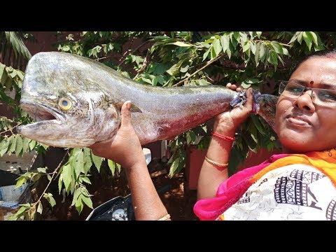 Cooking Big Sea Fish in Coconut Milk in My Village || Food Money Food