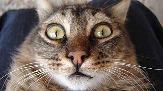 Кошка валит боком/кошачий дрифт)))