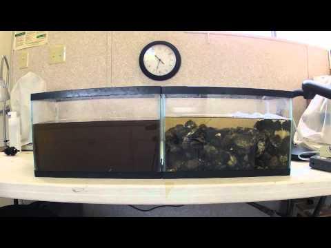Oyster Filtration