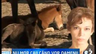This is Romania. Land of choice and massacre [Oana Pellea]