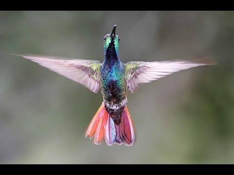 Costa Rica Birding and Bird Photography Trip