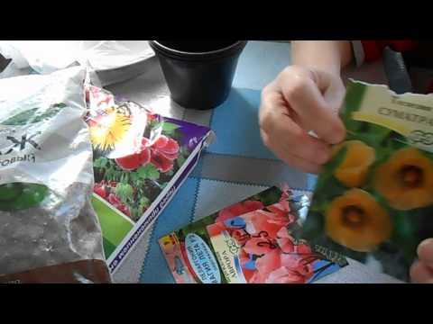 Ответы MailRu Выращивание комнатных растений из семян