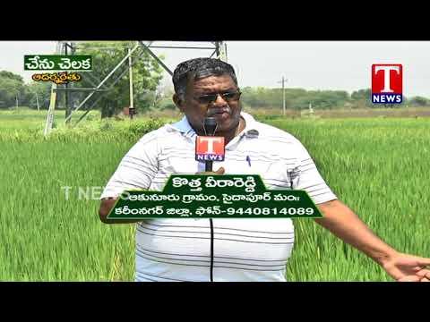 Farmer Veera Reddy About Organic Farming | Chenu Chelaka | TNews live Telugu