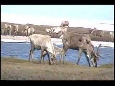 Predator Control in Alaska