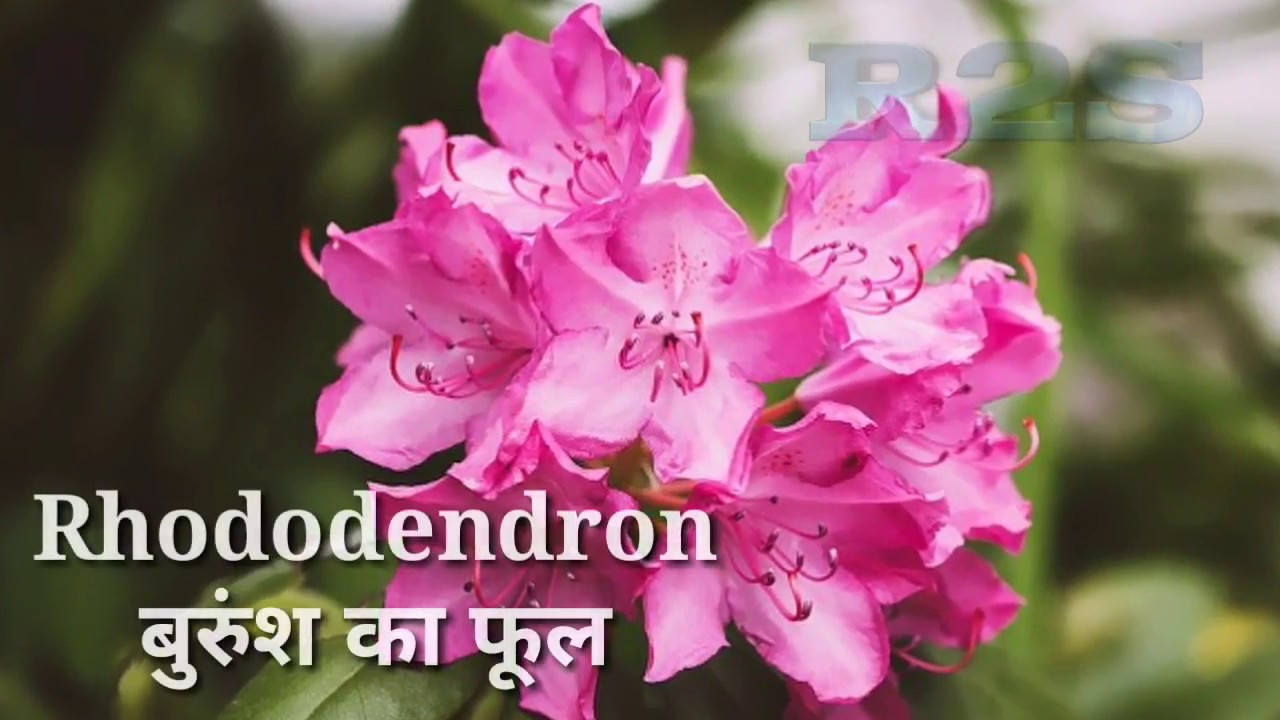 Flowers Name Hindi And English With Image Youtube