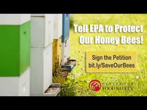 Tell EPA to Protect Our Honey Bees from Pesticides