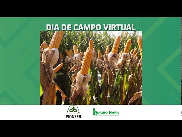 DIA DE CAMPO PIONEER | P3282 e P3707