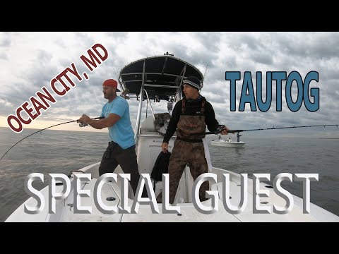 TAUTOG Fishing: Ocean City, MD SPECIAL GUEST