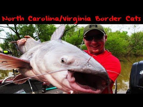 Border Fishing: Kerr Lake Catfish