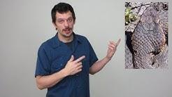 HOW TO IDENTIFY VENOMOUS SNAKES VS NON-VENOMOUS SNAKES