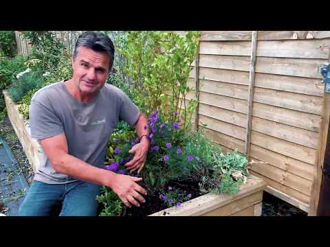 Maintaining A Neglected Border - Garden On A Roll